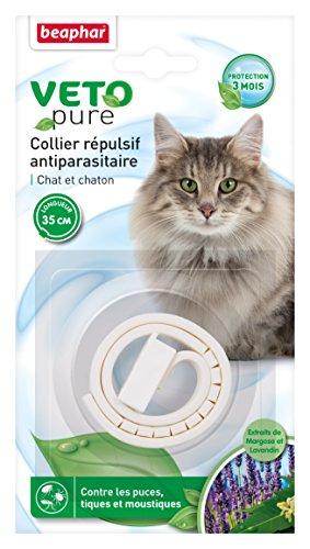 R pulsif naturel chat r pulsifs - Repulsif chat jardin naturel ...